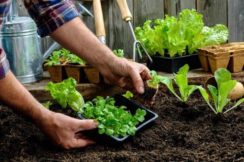 благоприятные дни по Лунному посевному календарю для посевов и посадки для садовода и огородника на 2021 год фото 2