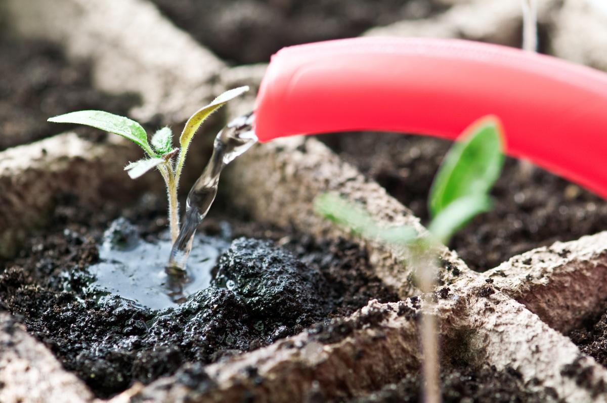рекомендации и советы по уходу за рассадой на подоконнике фото