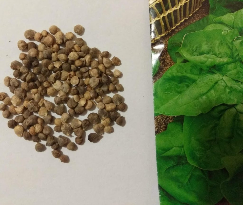 предварительная подготовка семян к посеву фото