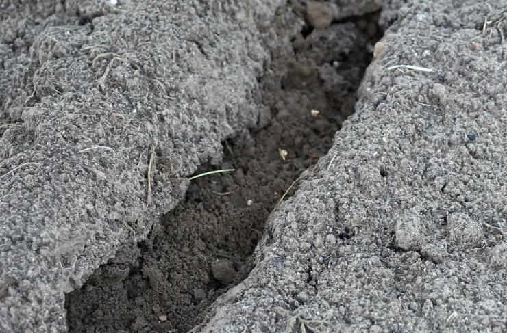 подзимний посев свеклы осенью 2021 года фото