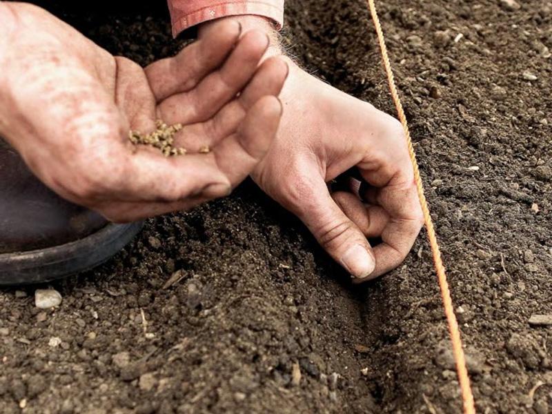 лунный календарь для посева на рассаду фото