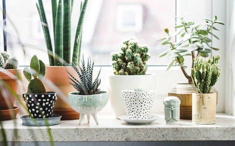 Лунный календарь для комнатных растений для цветовода на апрель 2021 года на каждый день фото