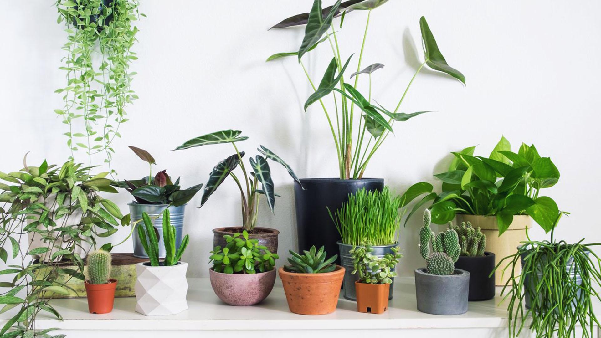 Лунный календарь для комнатных растений и цветов на апрель 2021 года: благоприятные дни и сроки для цветовода фото