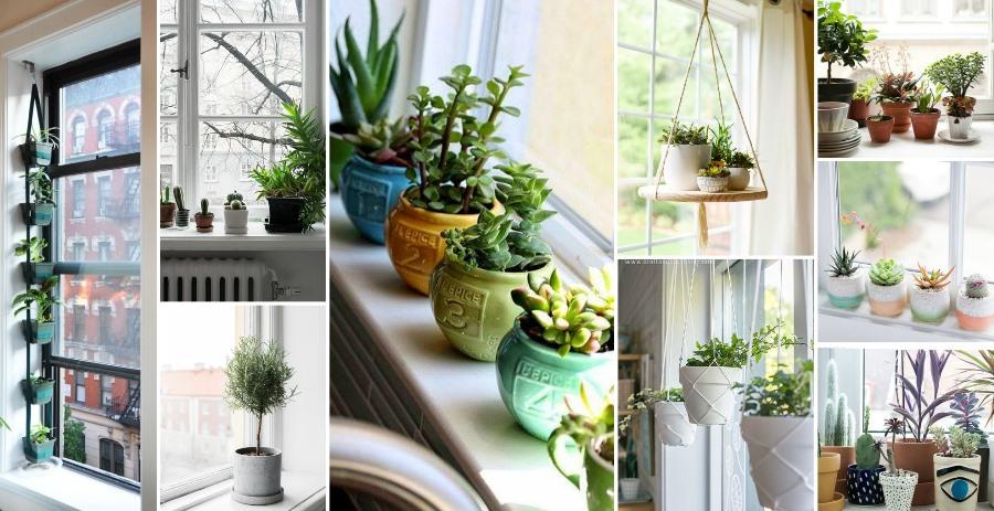 влияние фаз Луны на вегетацию комнатных растений и цветов фото