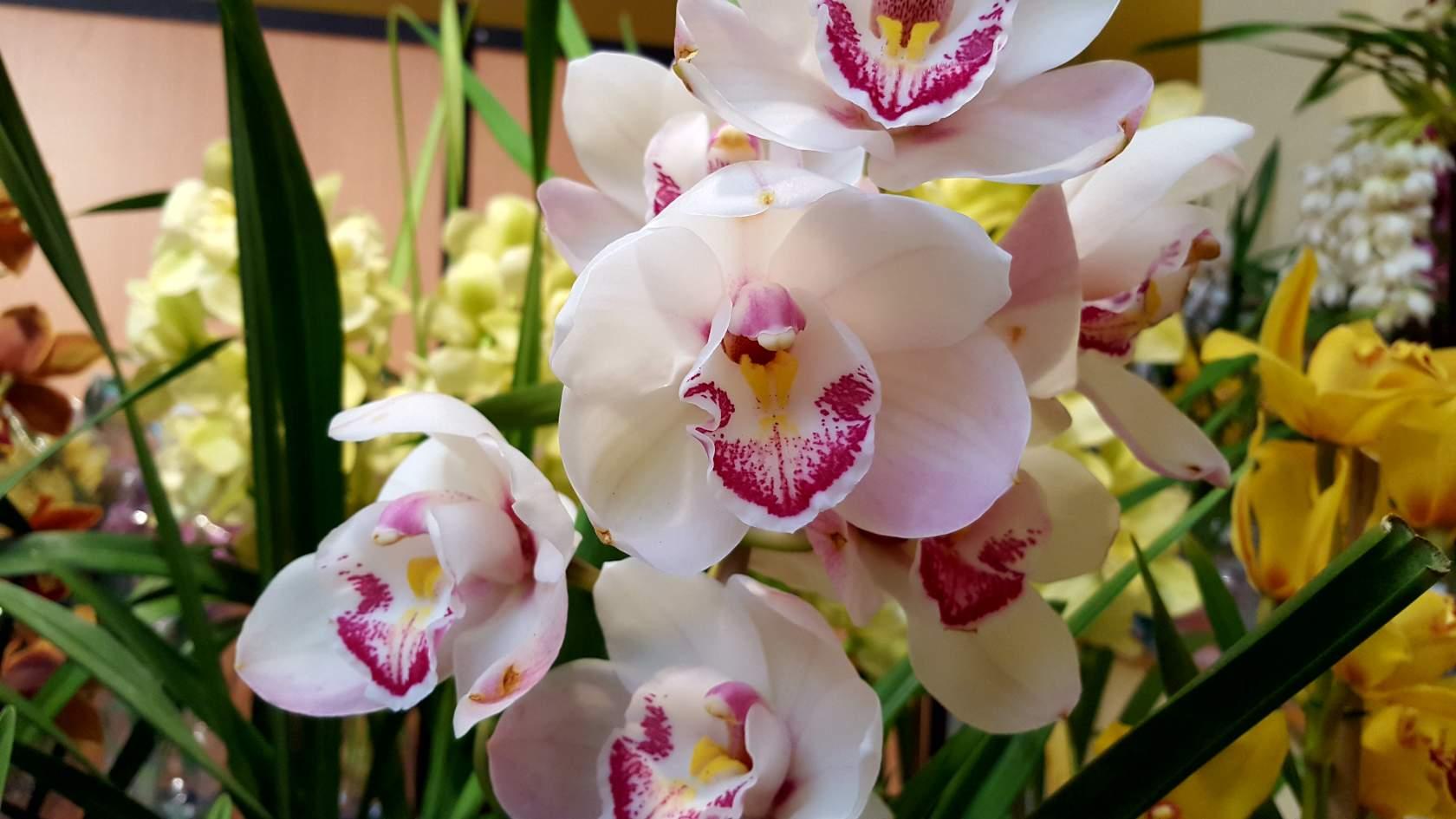 благоприятные дни для пересадки орхидеи в 2021 году по Лунному календарю фото