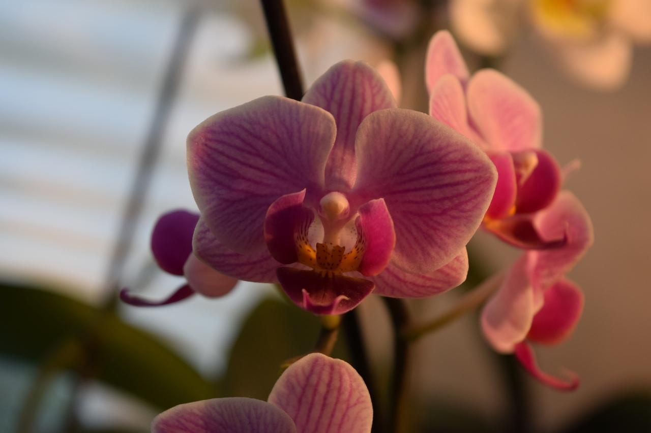 Лунный календарь по пересадке, посадке и уходу за орхидеями в 2021 году фото 1