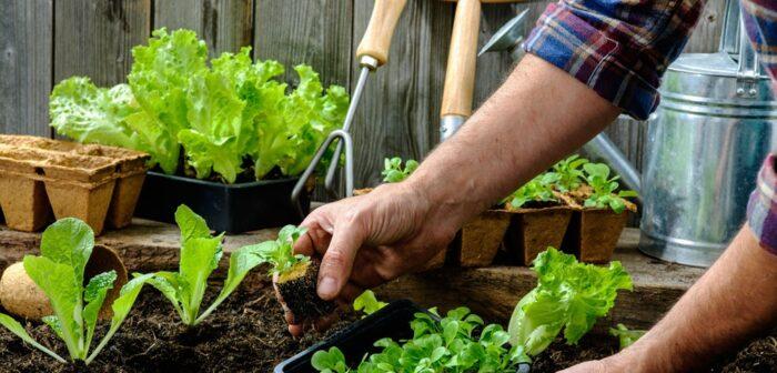 рекомендации по выращиванию рассады салата в домашних условиях фото