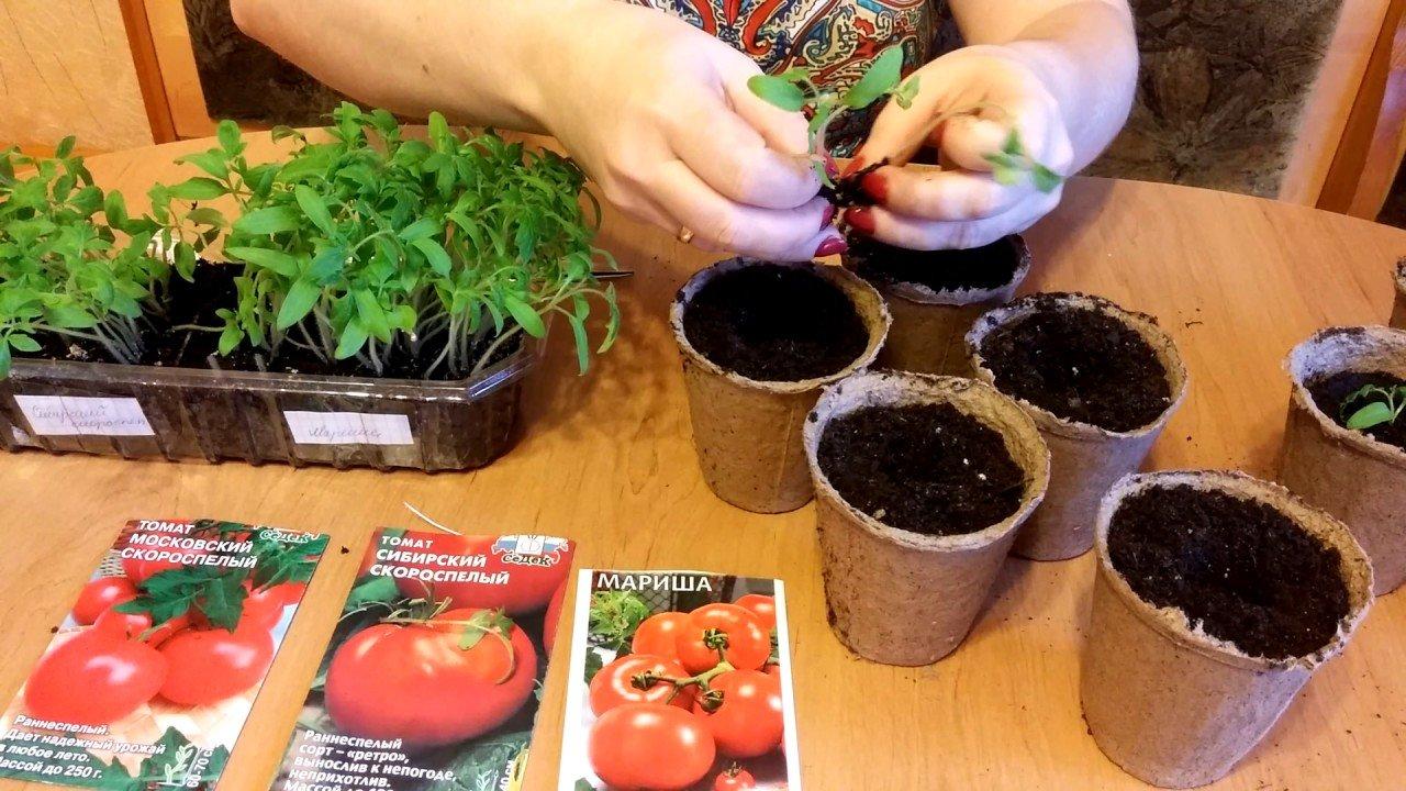 посадка томатов в апреле 2021 года: благоприятные дни по Лунному календарю для помидоров, сроки по регионам фото