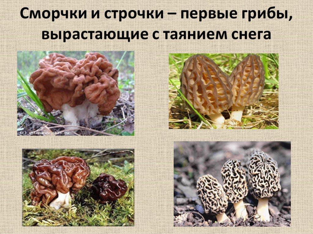 съедобны или ядовиты, краткая история фото