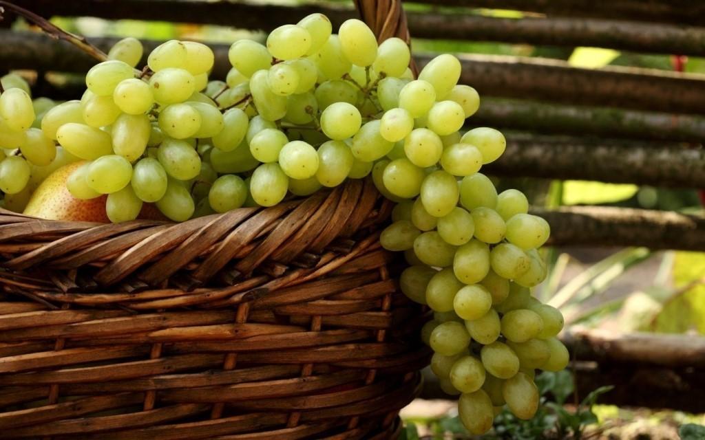 посадка винограда: пошаговая инструкция + фото 1