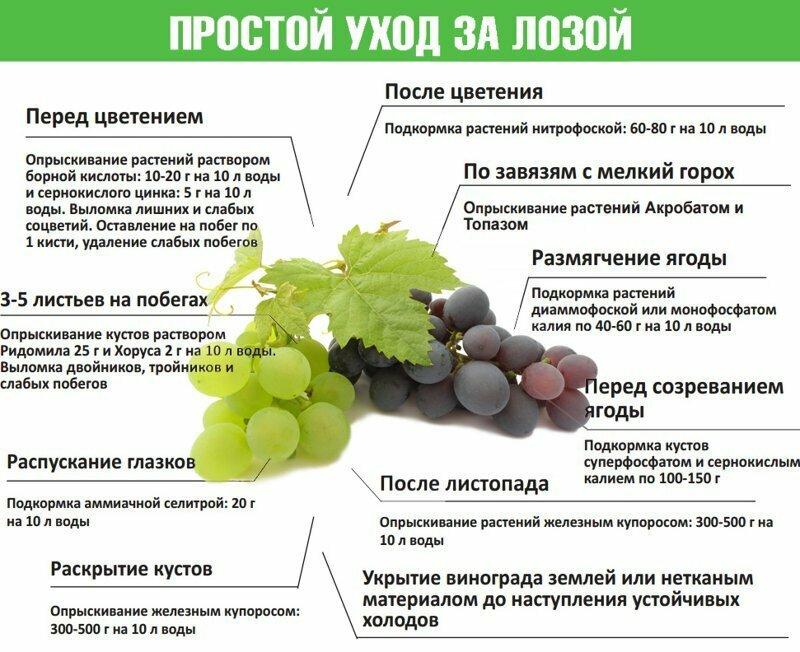 календарь виноградаря на 2021 год для ухода за виноградом по месяцам фото