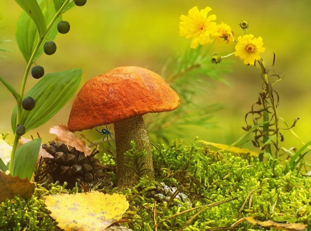 грибы лето 2021 года