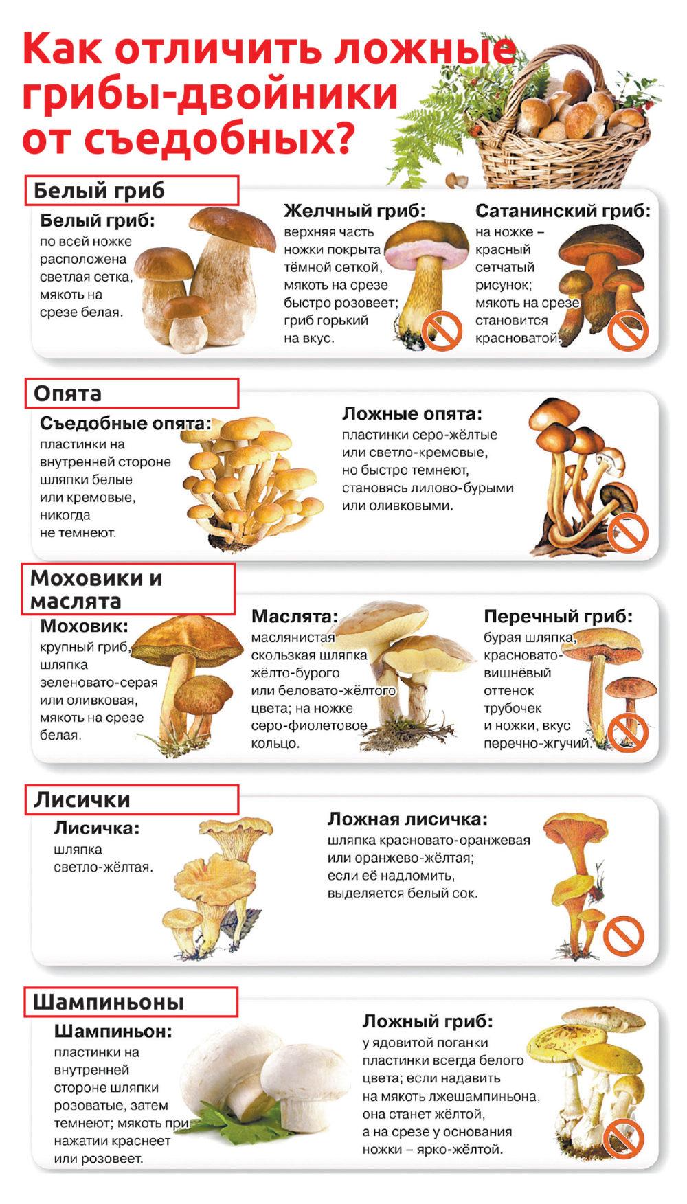 список июльских съедобных грибов + фото 1
