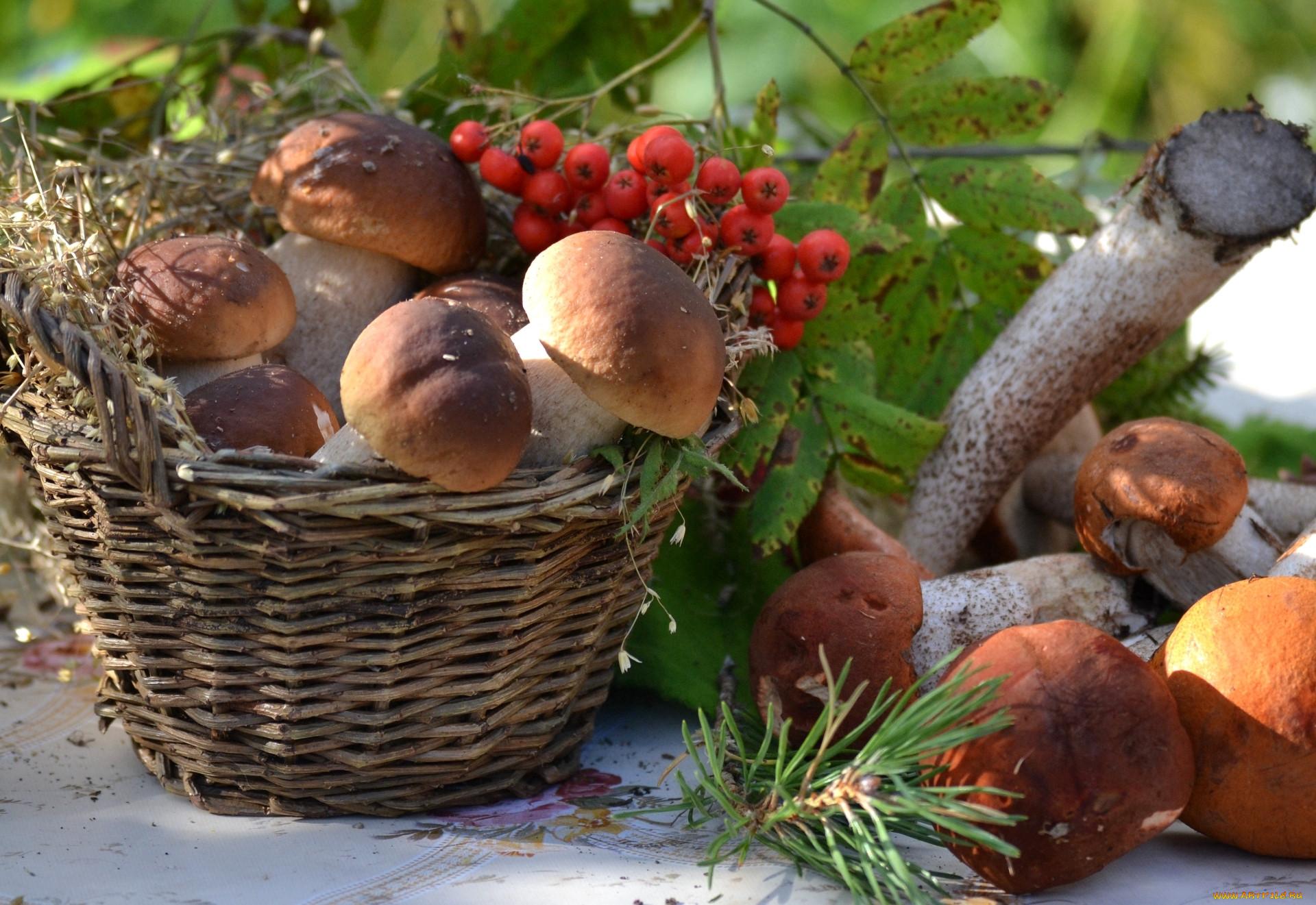 грибы в августе 2021 года, какие растут и где